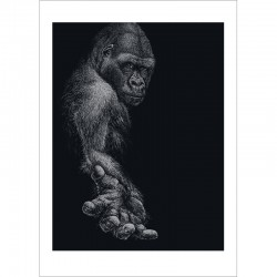 GREAT APE postkarte